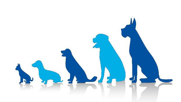 Animales domésticos y humanos