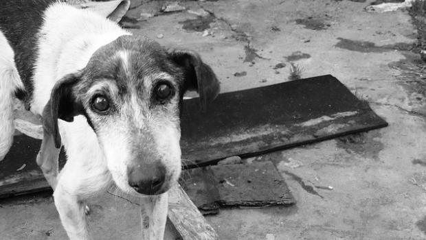 ¿Cuántos perros se abandonan al año en España?