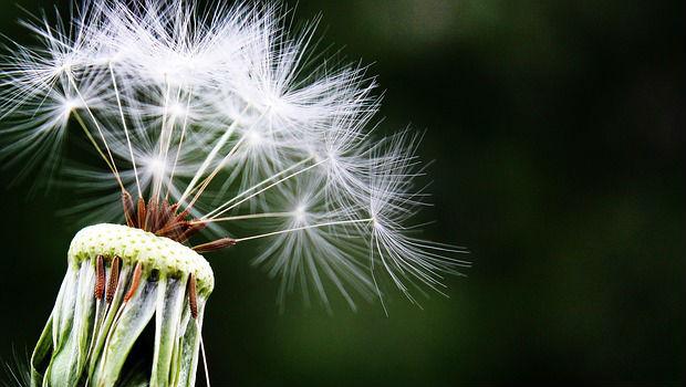Alergia al polen en 2017