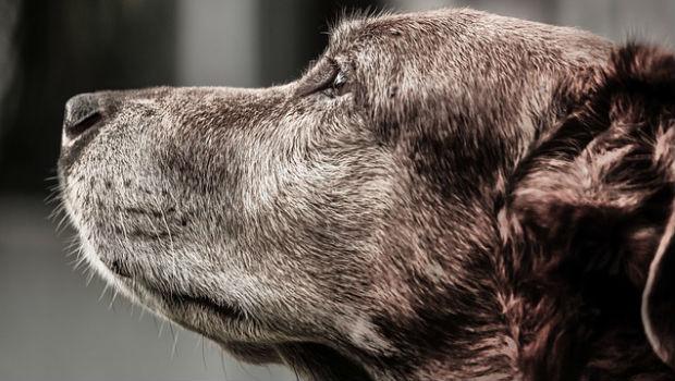 Mascotas y decesos