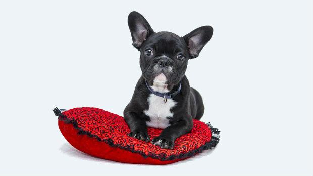 Ley de perros peligrosos en España