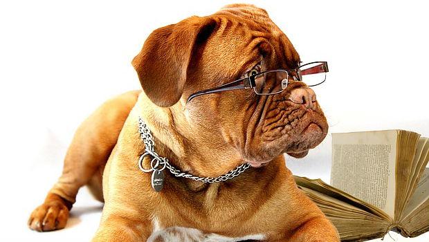 ¿Cuántos perros hay en España?