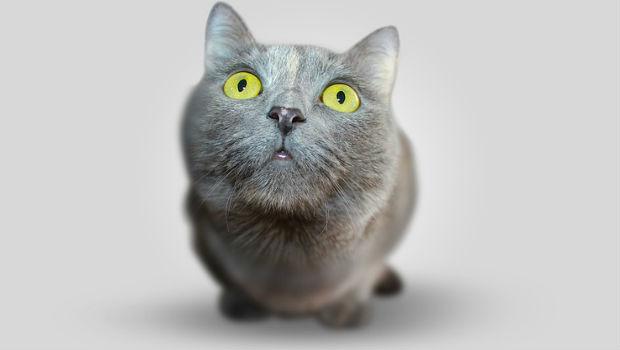 7 curiosidades sobre los gatos
