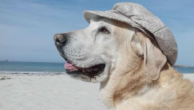 Riesgos del verano para los perros